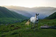 Spotkanie o świcie - szlak nieopodal wsi Roszka w Gruzji